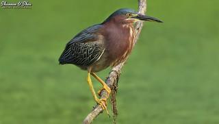 Giving you the bird