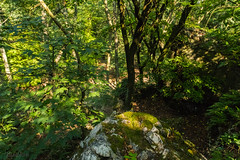 Rocks in the woods - Flashback (Ranildum) Tags: rocks tree forest green canon 77d eos77d canoneos77d tamron dúbravka bratislava rock wood park landscape grass