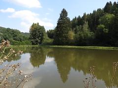 Fischteich Paulinzella (germancute) Tags: outdoor nature thuringia thüringen landscape landschaft wildflower wald flower forest dorf tree teich