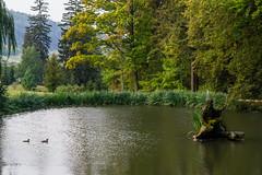 Fishpond again (Stanislav Vysloužil) Tags: nature desna outdoor morava sumperk kouty loucna morning helios 58mm canon blurry water castle zamek park zamecky