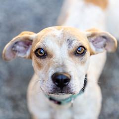 Lighting15Sep20181.jpg (fredstrobel) Tags: dogs pawsatanta atlanta usa animals ga pets places pawsdogs decatur georgia unitedstates us