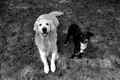 Oliver ❤ Milù (ilariasantinelli) Tags: dog cani bw bianco nero cuccioli