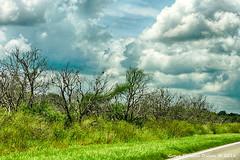 DSCN9801 (Grace Pedulla Dillon) Tags: florida gracedillon gracepedulladillon clouds weather dead trees rural citrus
