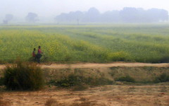 two on a bike (kexi) Tags: uttarpradesh india asia bicycle 2 two pair yellow fields red horizon samsung wb690 painterly february 2017 wallpaper road countryroad landscape view field layers layered train