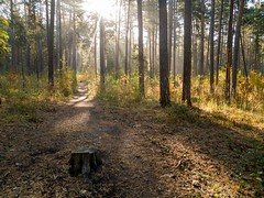 IMG_20180919_091946 (alexey.turkov) Tags: huaweip9 huawei forest autumn sun sunlight