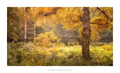 September (Amar Sood) Tags: amarsoodphotocom amarsoodphotography autumn nationaltrust ashridgeestate landscape landscapes intimatelandscape sony a7rii nikkor 247028 nature