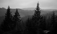 Rainforest (estenvik) Tags: 2018 august erikstenvik estenvik eidsvoll boreal regnskog wood woodland spruce hill hills hilly rain fog mist showers skodde regskurer tåkeakershus norge norway blackandwhite grayscale monochrome