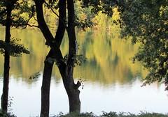 steinsee früh am morgen (lualba) Tags: lake see steinsee bavaria bayern tree baum blätter leaves spiegelung reflection