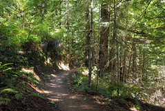 More curves (LeftCoastKenny) Tags: purisimacreekredwoods trees forest ferns hill trail