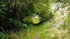 Just a hole (prajpix) Tags: highlands scotland green tree trees track road path hole greenery foliage tunnel walk nature leaves exploring