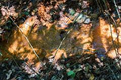 Mud pit (MarksPhotoTravels) Tags: bluewallpreserve greenvillecounty southcarolina