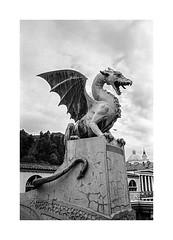 (Oeil de chat) Tags: nb bw monochrome film pellicule argentique 35mm voigtlander bessa r2a colorskopar kodak trix rodinal statue sculpture slovénie ljubljana dragon contraste voyage