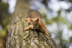 DSC_7021 (dt____1) Tags: beyondbokeh bokehlicious squirrel