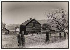 The Old Barn (CDay DaytimeStudios w/1,000,000 views) Tags: antiochca barn blackdiamondminesregionalpreserve bluesky california eastbay eastbayregionalparks grassland hills hillside ridge sanfranciscobayarea trees