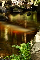 sunlit water (westoncfoto) Tags: padleygorge water rocks wood leaves moss lichen
