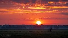 Magic Morning (marcusbengtsson1) Tags: summer sun deadtree nature telephoto redsky burningsky hdr landscape birds kvismaren sweden morning sunrise