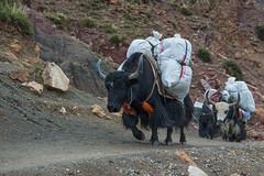 D4I_1527 (riccasergio) Tags: china cina tibet kailash xizangzizhiqu kora alidiqu cn