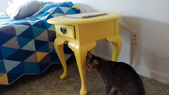 Completed Repainted Yellow Nightstands (osiristhe) Tags: cellphone painting furniture decor cat dizzy