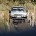 Crossing a swamp in the Okavango Delta, Botswana