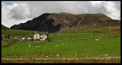 Snowdonia Farmhouse (zweiblumen) Tags: farmhouse mountain landscape snowdonianationalpark parccenedlaetholeryri gwynedd wales cymru uk mynyddmawr craigybera canoneos50d polariser zweiblumen