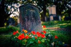 Camperdown Cemetery Sydney (eggwah123) Tags: cemetery tomb tombcarving oldtomb park bokeh depthoffield dof flower sonya7ii sonyemount voigtlander voigtlander40mmf12 voigtlander40mmf12vm voigtlander40mmf12mmount outdoor a7ii a7 sonya7 fullframe mirrorless