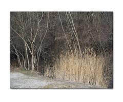 texture (Ernst Haas) Tags: x1d hasselblad innauen