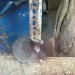 Rat enclosure (Zoo Emmen) thumbnail