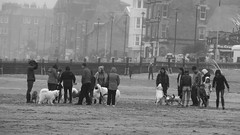 massed hounds on a misty beach (byronv2) Tags: blackandwhite blackwhite candid street beach dog dogs dogwalk group crowd peoplewatching portobello edinburgh edimbourg mist haar fog scotland coast coastal weather firthofforth rnbforth riverforth sea northsea