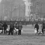 massed hounds on a misty beach thumbnail