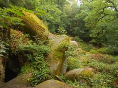 DSCN5572 (norwin_galdiar) Tags: bretagne brittany breizh finistere monts darrée nature landscape paysage