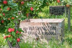 Washington Apples (Washington State Department of Agriculture) Tags: washington orchard naches yakima yakimacounty apple apples tree summer agriculture farm