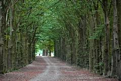 Allee am Morgen-1 (verlag1) Tags: wald allee buchenwald