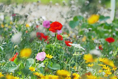 Photo of Flowers in Stormy Weather !