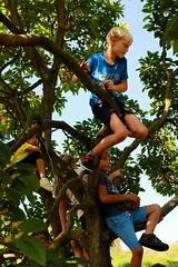 magnolia klimboom (regionaal landschap Schelde-Durme) Tags: waasmunster kinderen pdpo lia natuurbeleving hooiland speelnatuur landschap landbouw biodiversiteit samenwerken