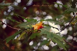Hello autumn! �