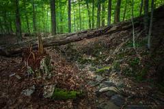 Adirondacks Mountain Reserve (Timur Dzhambinov) Tags: pentax k1 adirondacks ausable river hike forest mountains outdoors nature summer dfa 1530