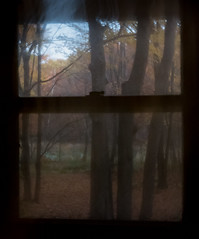 Dreams of Life II (William Flowers) Tags: autumn window leaves trees memories dreams liminal liminalspace