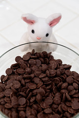 If I Just Take One (Arielle.Nadel) Tags: miarabbit bunny rabbit cute chocolate sneaky sweet toyphotography plush