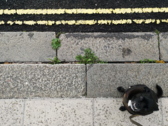 Pavement Hound (brombles) Tags: pavement dog hound mutt canine tarmac abstract brighton hove brightonandhove sussex huawei huaweip20pro