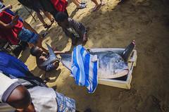 Madagascar - Big fish from the Ocean (Jarecki Photography) Tags: madagascar madagaskar trip holiday lemur nos iranja nose be jarecki adventure wale turtles sea ocean africa cameleon boa spider rum fishing island