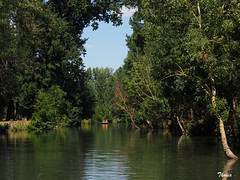 Venecia Verde (Gatodidi) Tags: venecia verde francia france marais pontevin canales barcos barcas remo paseo landscape paisaje agua río reflejos naturaleza natura