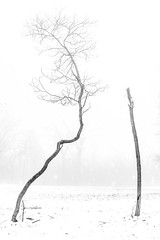Tree Shape (Wits End Photography) Tags: trees winter season nature mist minimal fog weather monochrome snow bw bare black blackwhite blackandwhite cold damp drizzle foggy freeze frost gray grey haze haziness icy landscape minimalism outdoor plant rain simple tree uncluttered white