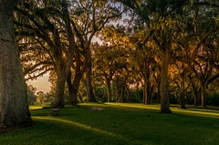 First Glow of Dawn! (andrew_carter091) Tags: landscape nature wildlife boktower boktowergardens gardens lakewales florida botanicalgardens dawn morning sunrise trees forest camera photo professionalphotographer photographer photography travelphotographer travelphotography nikonphotographer nikonphotography nikond3300 nikon