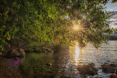 Flare (anderswetterstam) Tags: evening light nature water sun sunlight sunshine tree lake rocks summertime summer sunset dusk landscape