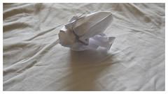 WHITE ON WHITE (SoS) (myphotomailbox) Tags: rotterdam netherlands indoor whiteonwhite smileonsaturday paper