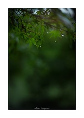 2018/8/11 - 24/24 END. photo by shin ikegami. - SONY ILCE‑7M2 / 七工匠  7artisans 50mm f1.1 (shin ikegami) Tags: 紅葉 sky 空 井の頭公園 吉祥寺 summer 夏 asia sony ilce7m2 sonyilce7m2 a7ii 50mm 七工匠 7artisans 7artisans50mmf11 tokyo photo photographer 単焦点 iso800 ndfilter light shadow 自然 nature 玉ボケ bokeh depthoffield naturephotography art photography japan earth