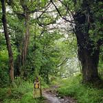 Signpost along the Camino Primtivo in Asturias between Grado and Salas thumbnail