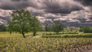 Vineyard Pouillac France