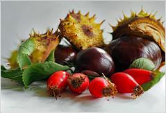 Herbstfrüchte 😊 (magritknapp) Tags: macro makro kastanien hagebutten blätter chestnut rose hip leaves