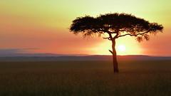 Weekend sunrise (John Kok) Tags: kenya masaimara enaidura july2018 nikkor7020028evr2